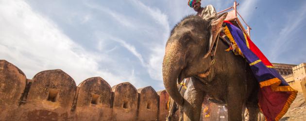 elephant-rider2